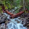 Fallen Redwood Over Uvas Creek