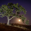 Moonrise With Oak Tree
