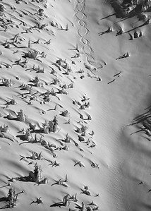 Sloppy Eights, Unidentified, Whitewater Backcountry 2020