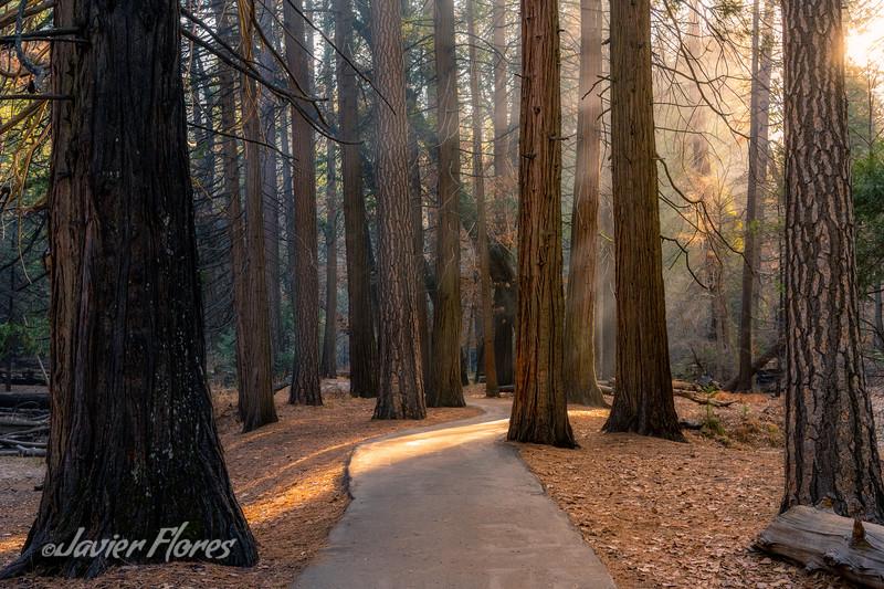Yosemite Valley Trail