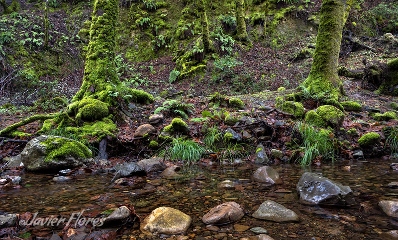 Santa Cruz Mountains Stream