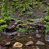 Santa Cruz Mountains Stream