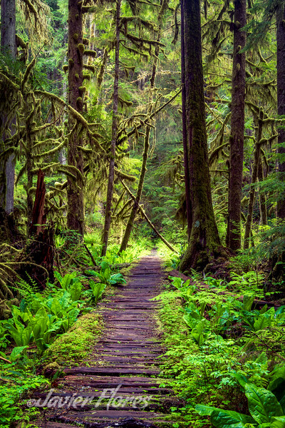 Trail Mount Rainier