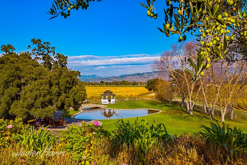 Scenic View of Napa Valley