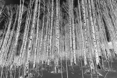 Night Trees #1
