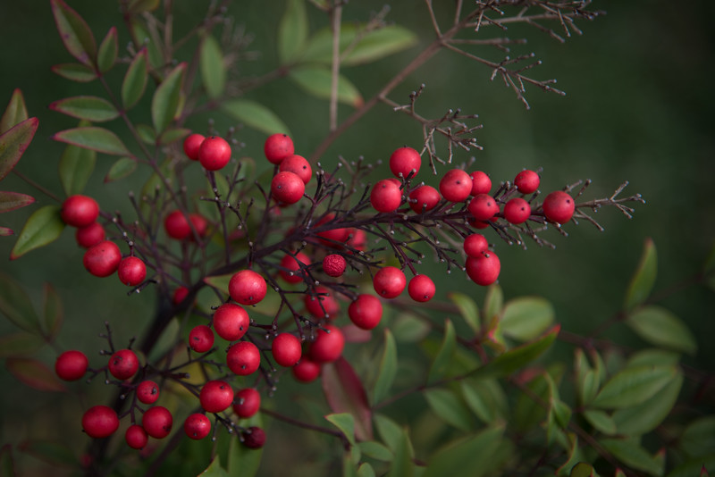 Berries in Green