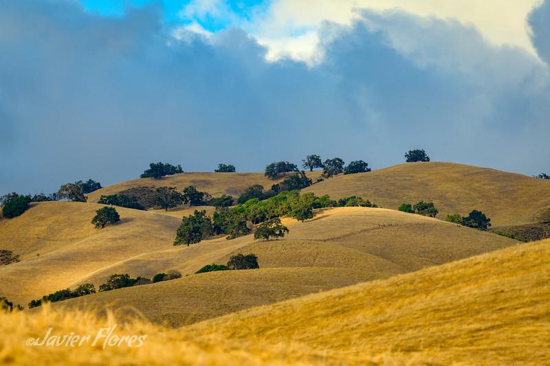 Californian Golden Rolling Hill