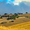 Californian Golden Rolling Hill