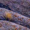 Alabama hills rocks and grass