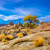 Lone Tree at Alabama Hills