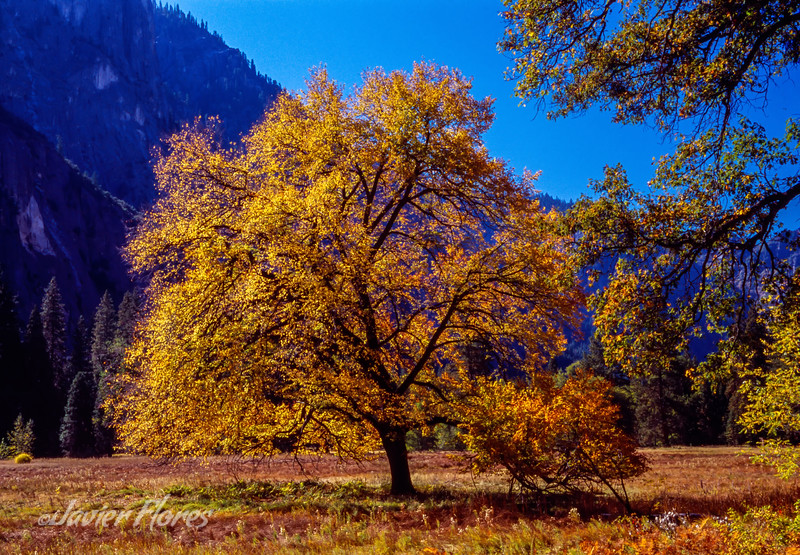 Yosemite Valley in the Fall