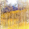 Aspen Ambience - Painting