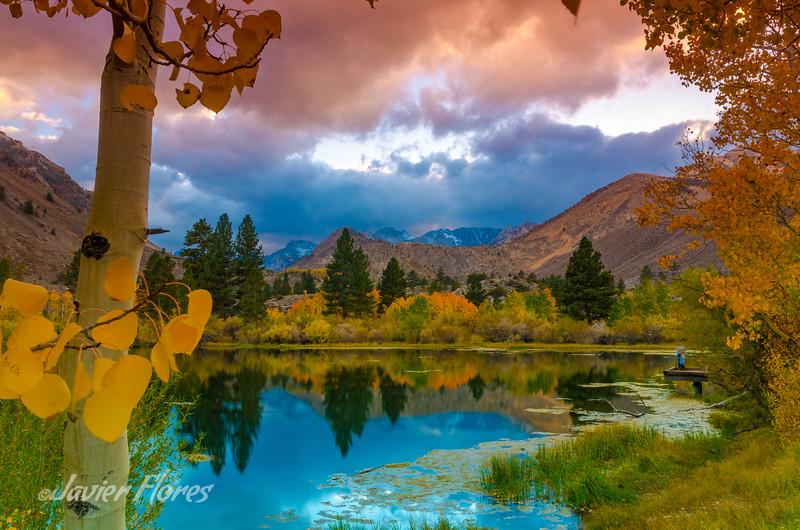 Aspen Tree at Intake Lake