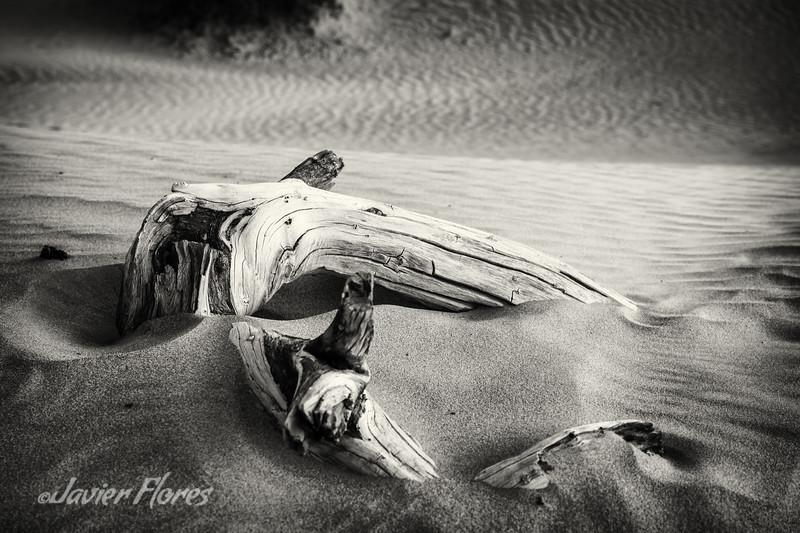 Brach in the sand