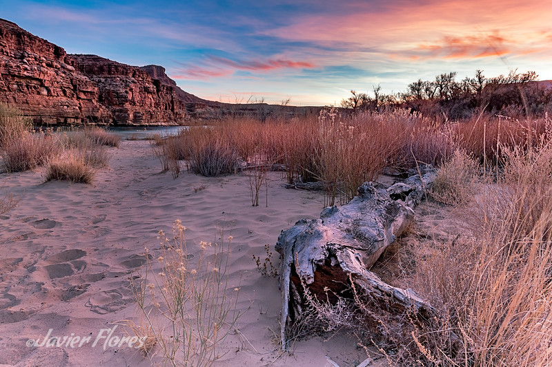 Driftwood on the Colorado river shore at sunset