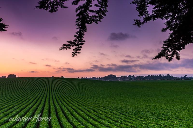 Farmland in Watsonville CA
