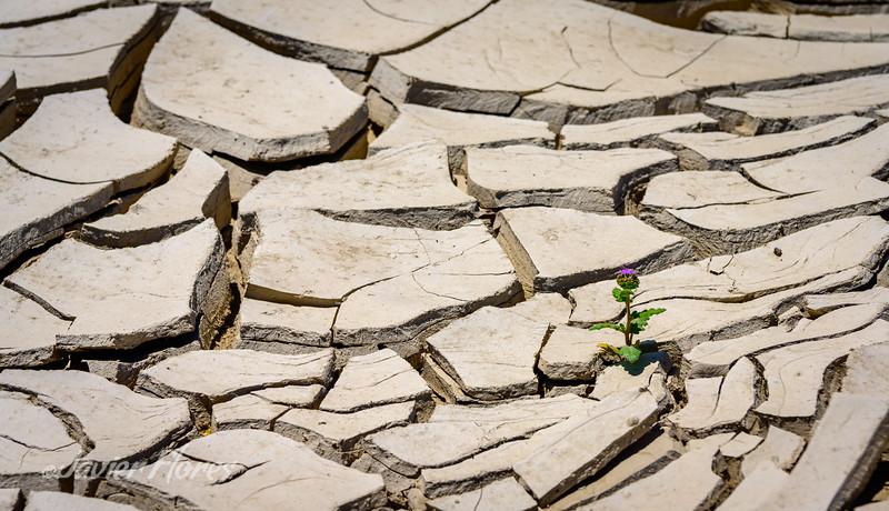 Life In The Dry Desert