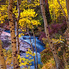 Lee Vining Canyon Aspens