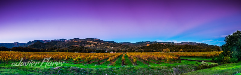 Sunset at Vineyards in Napa