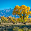 Bishop  California in the fall