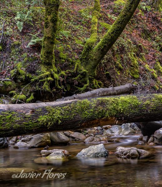 Fallen Trees Over Stream