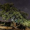 HWY 130 Oak