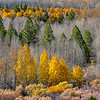 Fall Colors Layers