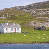 Solitary white cottage