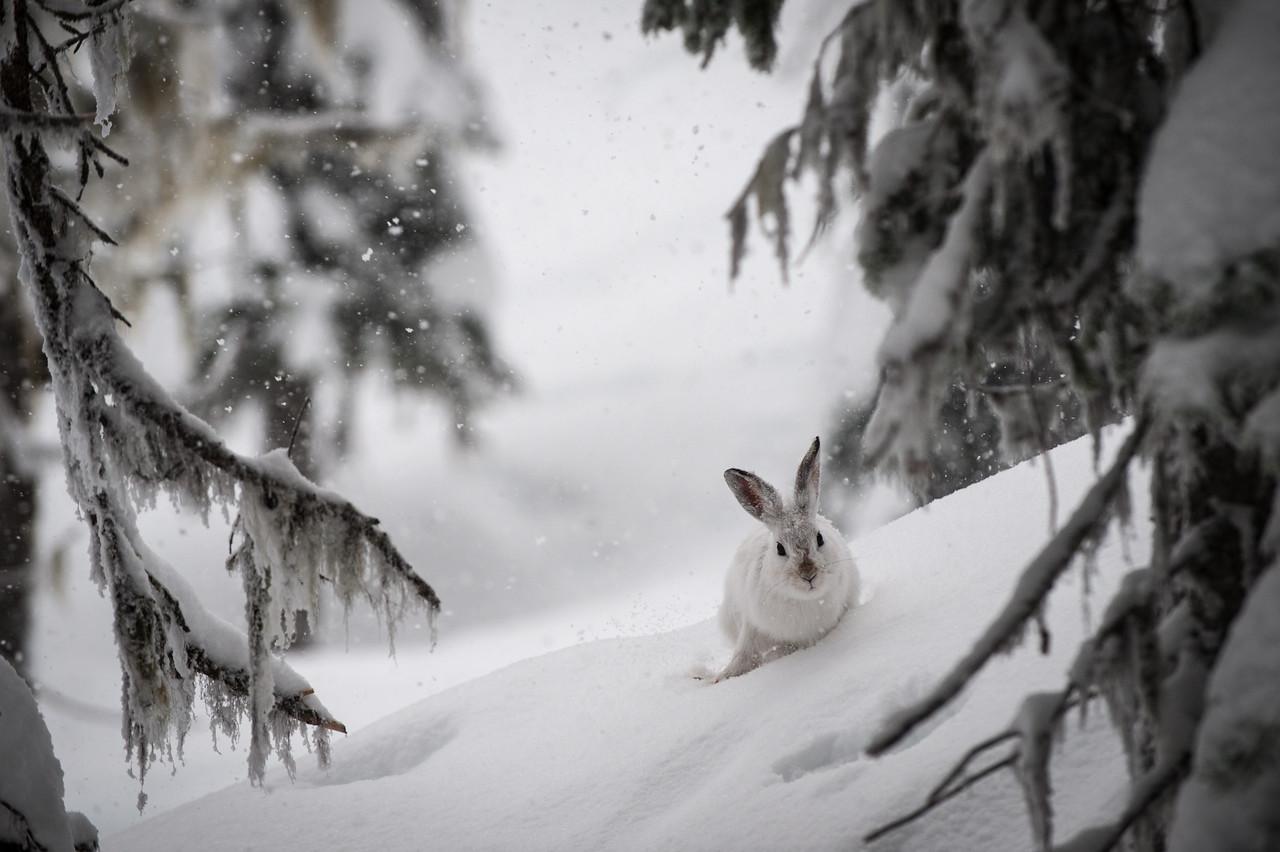 Backside Bunny