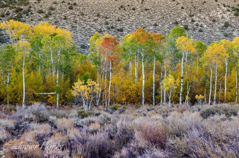 Aspens at Bishop Canyon