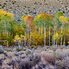 Aspens at Bishop Canyon