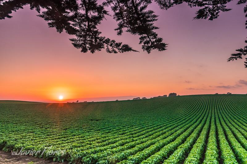 Watsonville fields at sunset