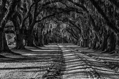 Live Oak-lined Drive, Charleston, SC
