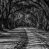 Live Oak-lined Drive, Charleston, SC