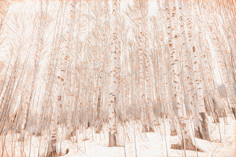 Winter Aspens - Painting #1