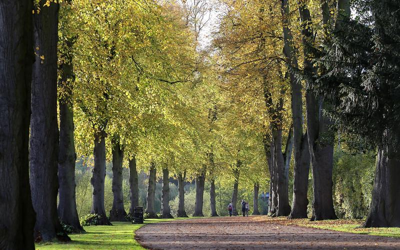 The Quarry in Autumn, Shrewsbury.