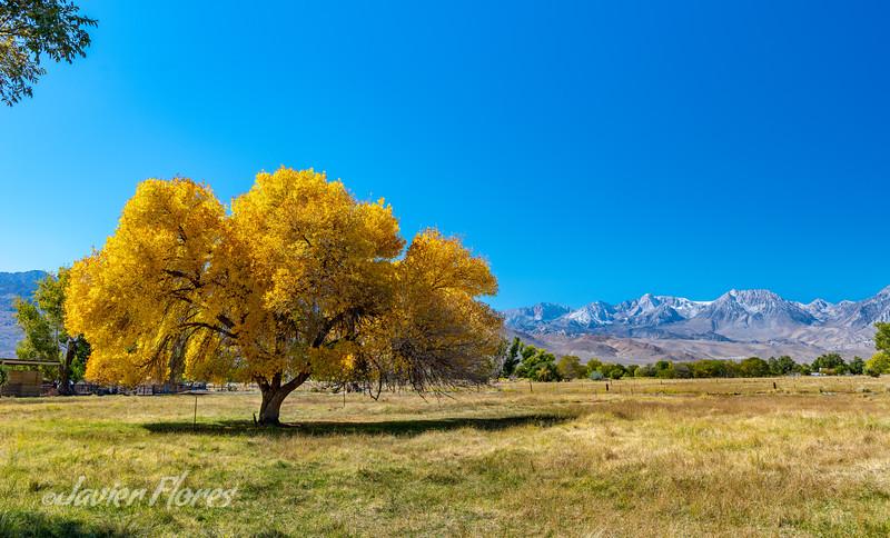 Fall colors at Bishop California
