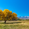 Fall colors at Bishop California
