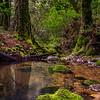 Lush Northern California Creek.