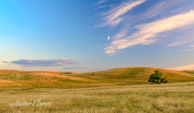 Yolo County Rolling Hills