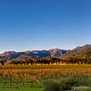 Napa In the fall Panoramic