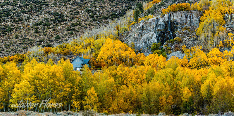 Bishop Creek cabin surrounded with Aspens