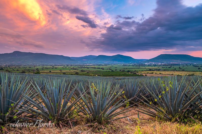 Jalisco Mexico Sunset