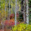 Fall Colors Lee Vining Canyon