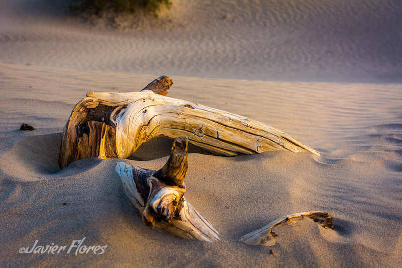 Tree brach on dunes