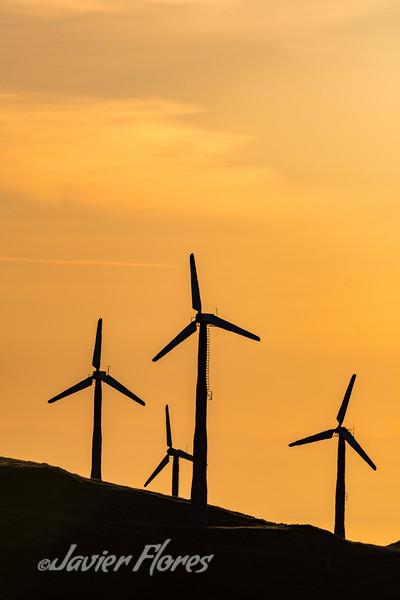 Silhouette Windmills at Sunrise