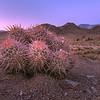 Sunset with barrel cactus at Alabama Hills