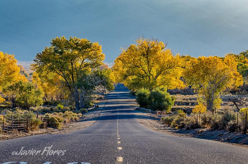 Road Near Bishop CA.