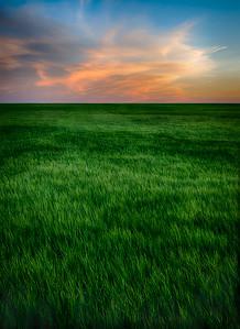 Dancing Prairie