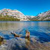 Tree Trunk in Tenaya Lake